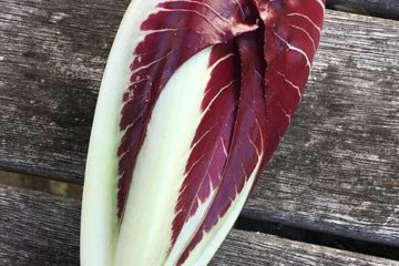 Fat Carrot Farm Radicchio