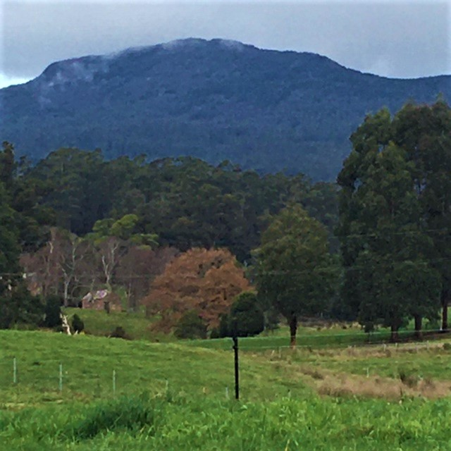 Felds Farm towards Mt Arthur